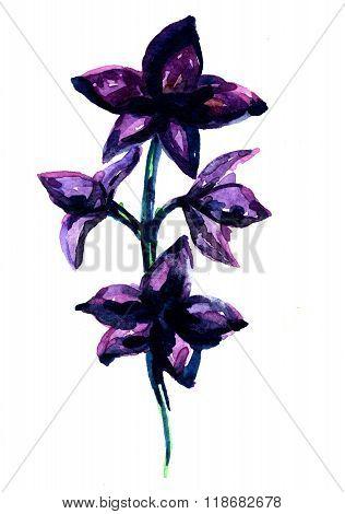 Spray Of Blossom Aquarelle