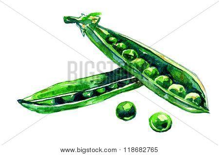 Pair Of Peapods Aquarelle