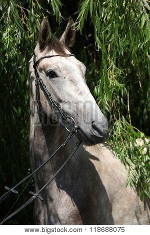 Beautiful Grey Horse Standing In Nature