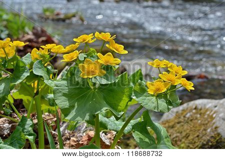 Flowers At River