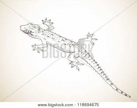 Sketch of gecko, Hand drawn illustration