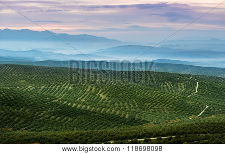 Beautiful landscape with rolling hills covered in olive trees, in Jaen province, Spain.