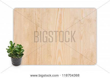Rubber Plant (ficus) In The Small Pots On Wood Texture Background.