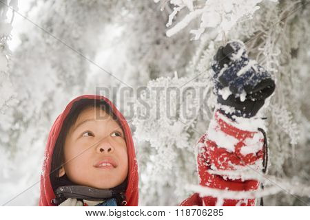 Boy touching snow covered branch