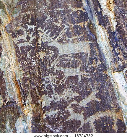 Primitive rock carvings