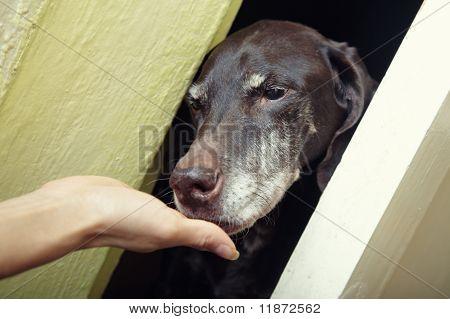 Domesticating Dog