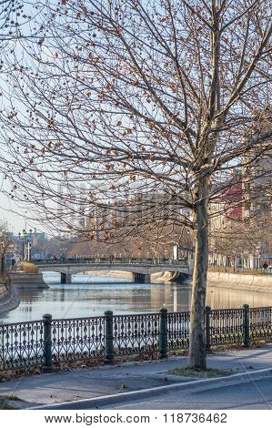 Frozen Tree With Few Leaves Over River In City. Winter Cityscape With Frozen Tree, Buildings, River