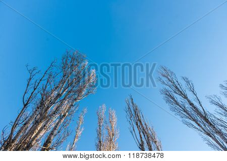 Trees against the blue sky