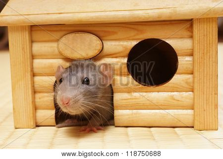 Decorative rat in a wooden house.