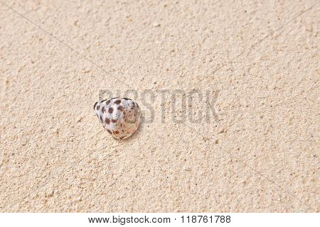 Seashells On The Sand In A Tropical Island, Maldives.