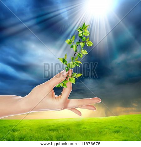 hands holding a plant