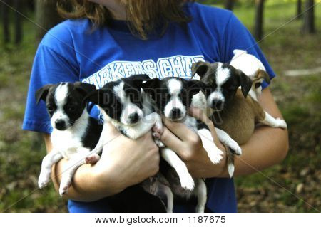 Arms Full Of Puppies