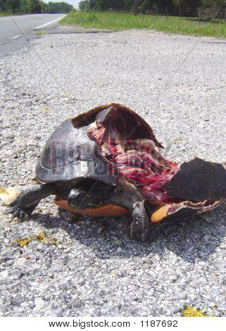 Roadkill 3