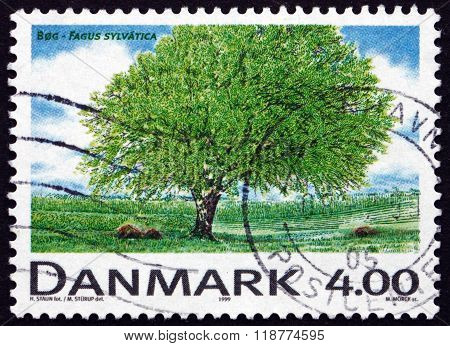 Postage Stamp Denmark 1999 European Beech, Deciduous Tree
