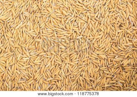Yellow Paddy Dried Rice