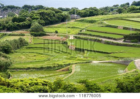 Rice terraces and cemetery