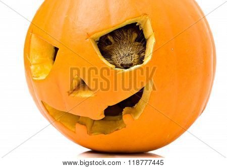 Halloween Pumpkin Mouse