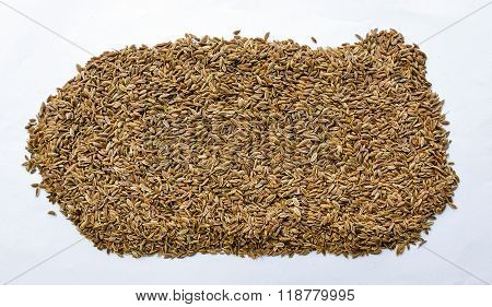 Superior quality dill seeds spread on white background for drying