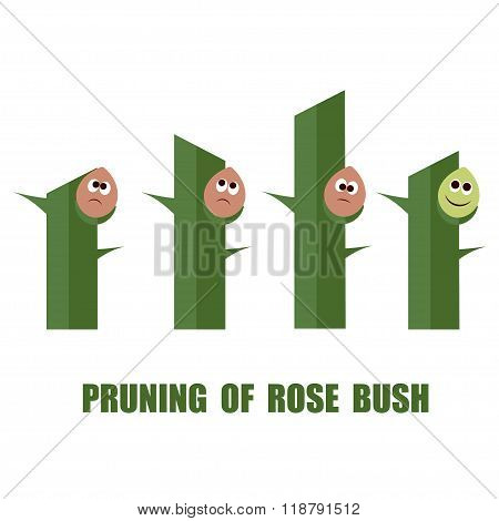 Correct And Wrong Ways To Prune Roses