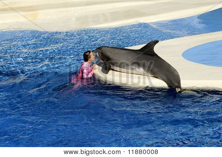 False Killer Whale With Female Trainer At Sea World