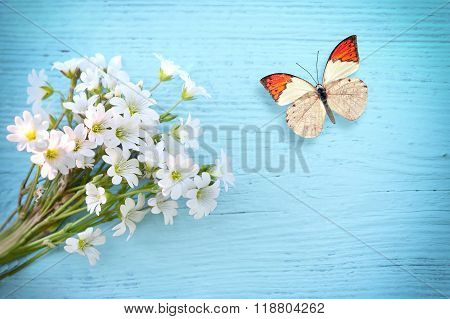 Butterfly And Flower Daisy On A Wooden Background