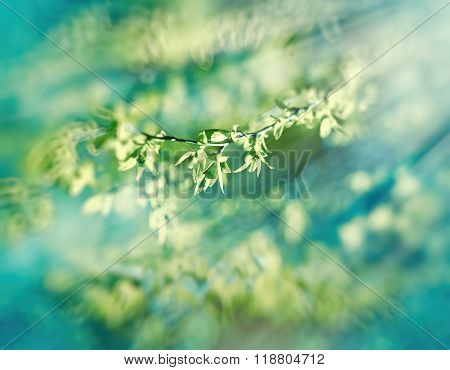 Soft focus on spring leaves lit by strong sun rays