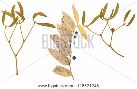 Set Of Wild Dry Pressed Leaves