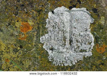 Algae And Lichens On Stone
