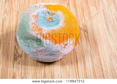 Moldy Mandarin On The Boards Kitchen.