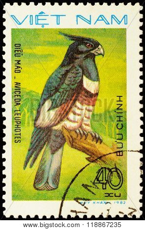Bird Aviceda Leuphotes On Postage Stamp