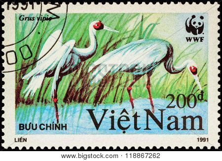 Crane Bird (grus Vipio) On Postage Stamp