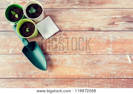 gardening and planting concept - close up of seedlings, garden trowel and seeds on table