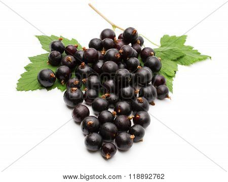 Branch of black currant on a white background.