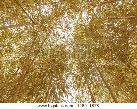 Retro Looking Bamboo Plant