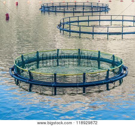 Cages for fish farming