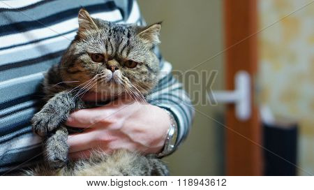 Serious cat on the hands of men