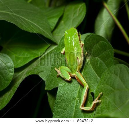 Green Frog Climbing On Tree