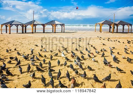 Large flock of pigeons resting on the sand. Windy winter day on the beach