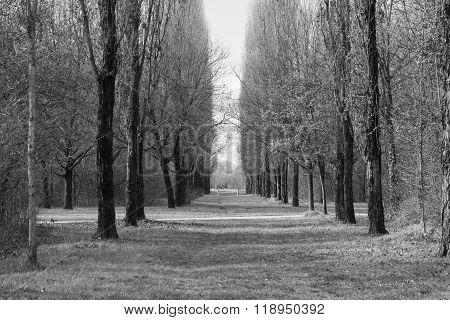 Milan (italy): Parco Nord At Winter