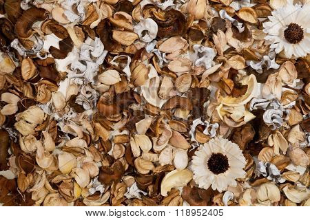 Dried White Daisies Flowers With Leaves Background