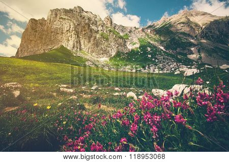 Rocky Mountains and green alpine valley with pink flowers Landscape