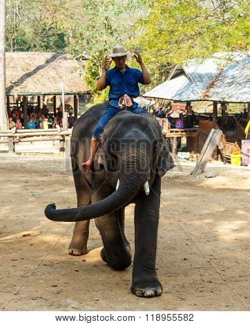 Mahout Ride Elephant And Elephant Is Dancing