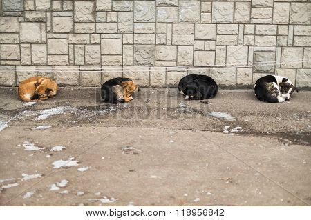 Cute Four Street Dogs Slipping Together