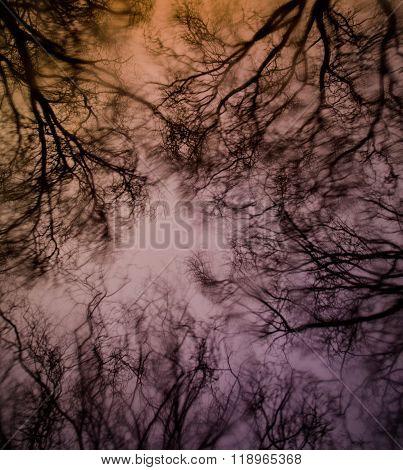 tree tops at dusk on a rainy day
