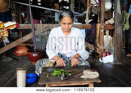 An unidentified Burmese woman make silk from lotus in Inle Lake, Myanmar.