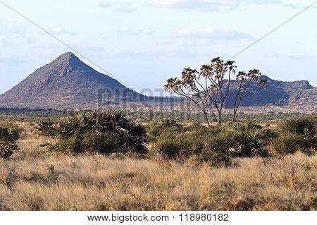 Samburu Summer In Africa