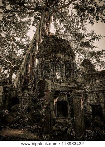 Ta Prohm (Rajavihara) in Angkor, Siem Reap, Cambodia