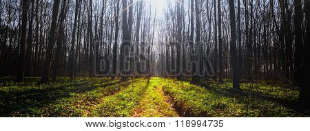 vintage spring forest trees. nature green wood sunlight backgrounds. sky