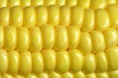 stock photo of corn cob close-up  - Close - JPG