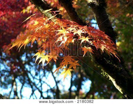 Autumn Leaves Jpg
